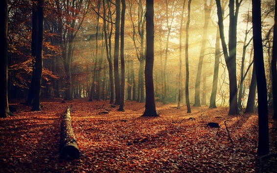 Wallpaper Autumn nature, forest, leaves, trees, light rays