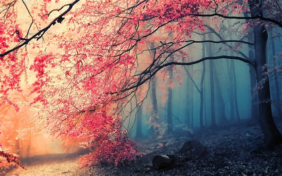 Wallpaper Beautiful autumn tree red leaves in the forest