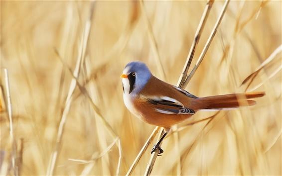 Papéis de Parede Pássaro, grama vara, verão