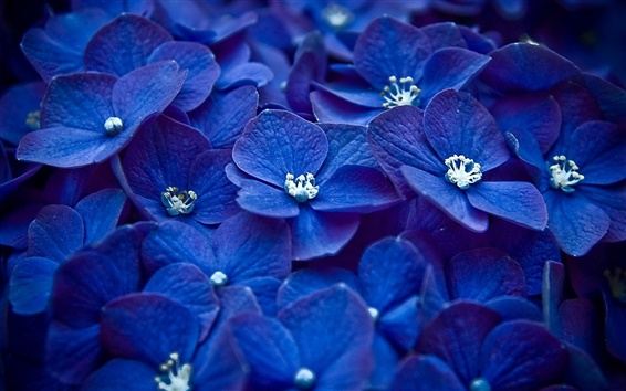 Wallpaper Blue flowers focus