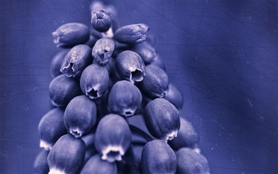 Обои Синий фиолетовые цветы крупным планом