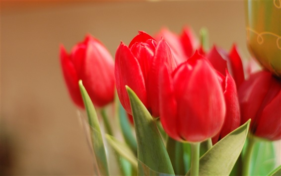 Обои Букет красных тюльпанов крупным планом