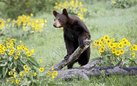 Обои Бурый медведь, засохшим деревом, желтые цветы