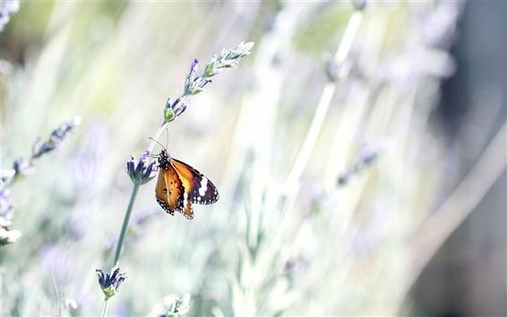 Fondos de pantalla Mariposa, flor silvestre, la luz brillante