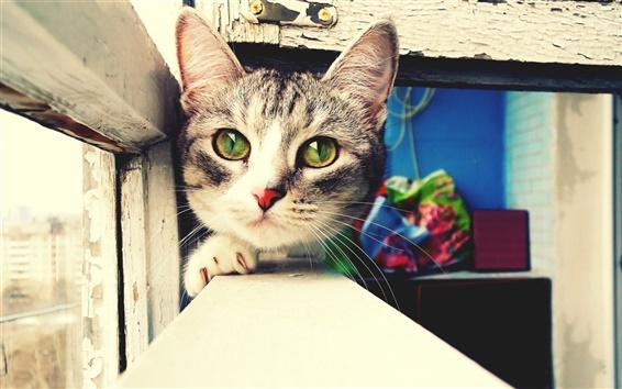 Обои Cat лицо крупным планом, зеленые глаза, подоконник