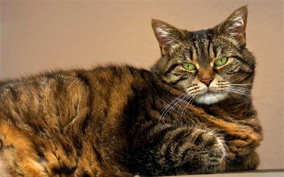 Papéis de Parede Vista lateral do gato, olhos verdes