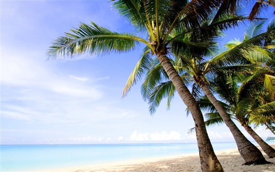 Wallpaper Coast, sea, island, palm trees, beach