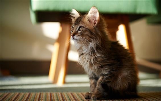 Обои Симпатичная кошка в комнате