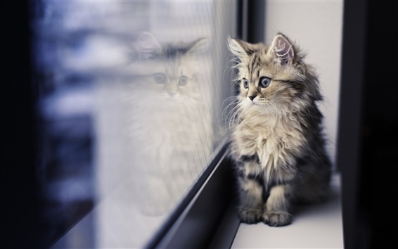 Papéis de Parede Gatinho bonito, peitoril da janela, olhando
