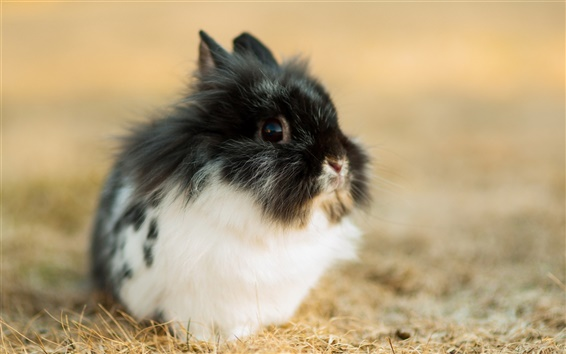 Wallpaper Cute rabbit, black white