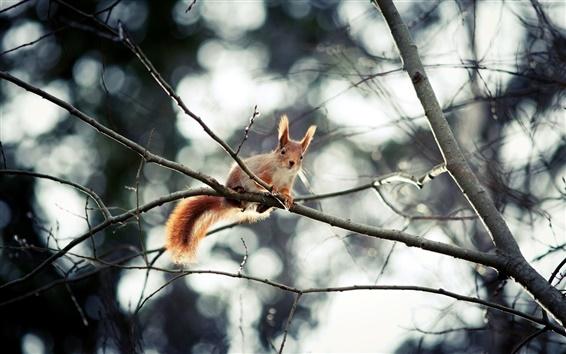 Wallpaper Cute squirrel, high tree, twig