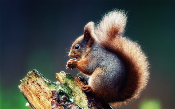 Wallpaper Cute squirrel on a tree branch