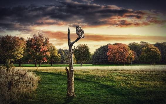 Обои Дизайн коллаж фотографий, деревья, сухие, сова, красное небо