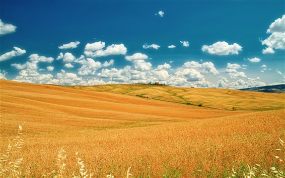 Wallpaper Italy, Tuscany, summer fields, sky, clouds, yellow, blue