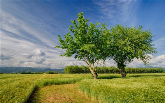 Wallpaper Italy nature scenery, spring, fields, trees, sky