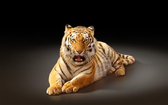 Papéis de Parede A maior gato, o tigre de Amur, fundo preto