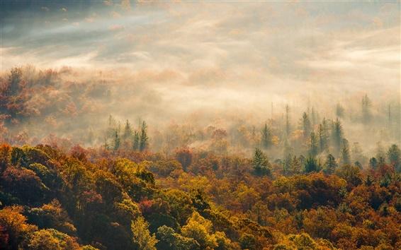 Papéis de Parede Bom dia, Outono floresta neblina