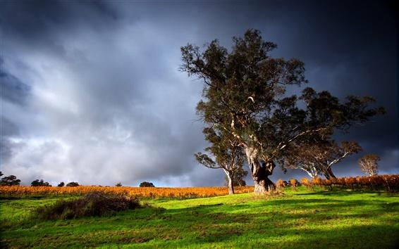 Обои Природа пейзажи, зеленая трава, старое дерево, гром облака, небо