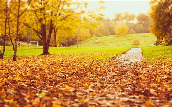 Papéis de Parede Parque do outono, árvores, folhas amarelas e laranja