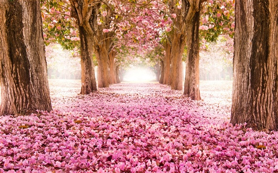 Wallpaper Pink indus flowers, path, trees, beautiful scenery