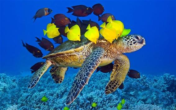 Papéis de Parede Tartaruga marinha, oceano, peixes debaixo d'água, amarelo e marrom