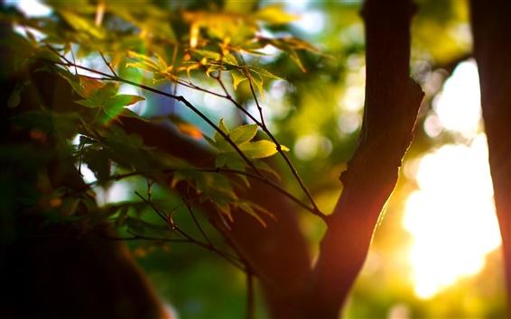 Wallpaper Summer, trees, bokeh, leaves, sunlight