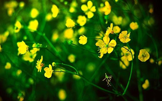 Wallpaper Yellow little flowers, green background