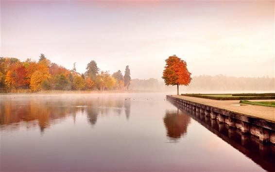 Fond d'écran Automne, nature, paysage, arbres, orange, eau, matin, brume