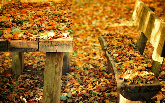 Wallpaper Autumn nature park, bench, table, fall leaves