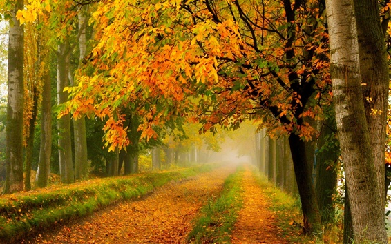 Wallpaper Autumn nature, park, forest, trees, yellow leaves, road