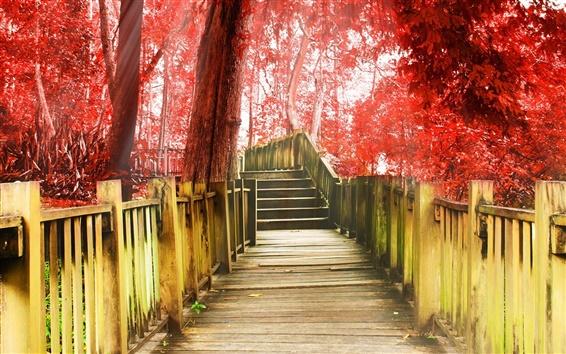 壁紙 秋の公園、通路、階段、木、紅葉