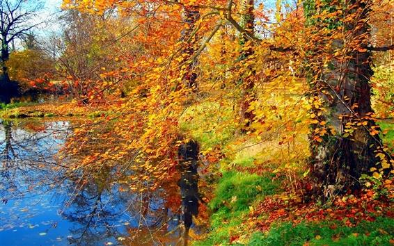 Fond d'écran Automne étang, herbe, arbres, feuilles jaunes