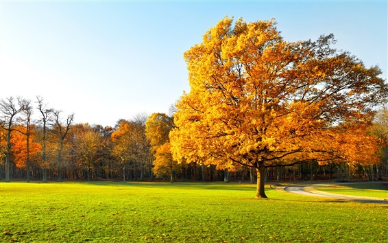 Fondos de pantalla El otoño los árboles, bonito jardín, hojas amarillas, hierba verde, luz del sol