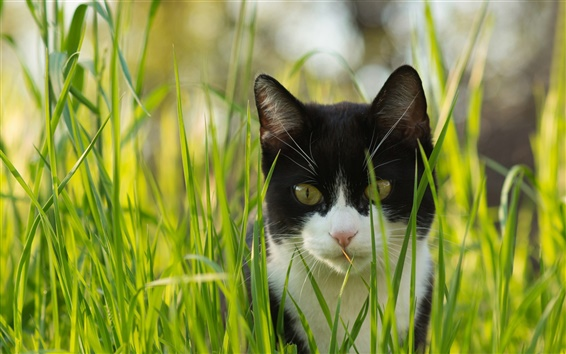 Wallpaper Cat in the grass, black and white