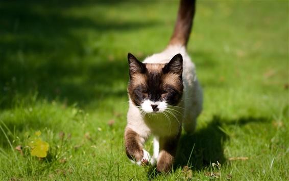 Papéis de Parede Gato andando na grama