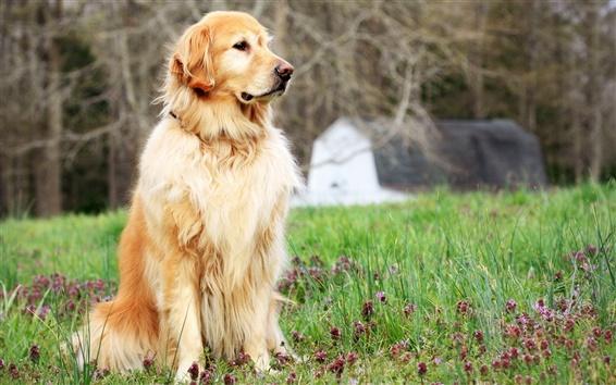 Обои Собака стоит в траве