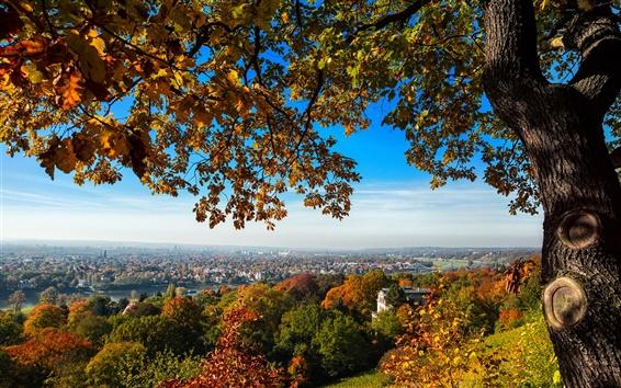 Wallpaper Dresden, Germany, hill, trees, autumn