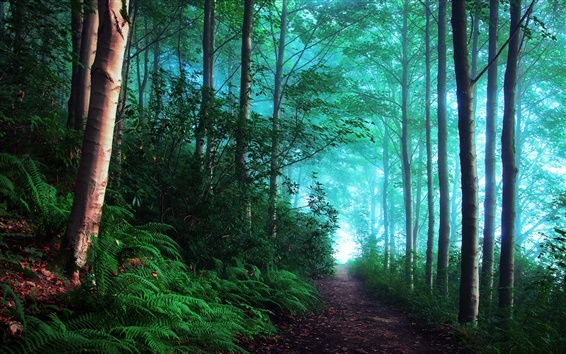 Wallpaper England, early morning forest, fog, blue
