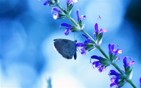 Wallpaper Flower with butterfly, blue glare