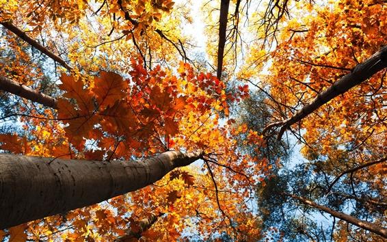 Обои Осенний лес, деревья, желтые листья, небо, посмотреть к началу