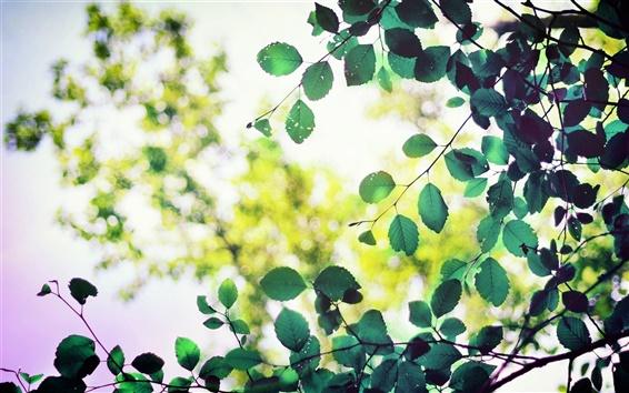 Обои Зеленые листья, солнечный свет, боке
