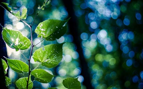Wallpaper Green nature, branch, leaves, bokeh