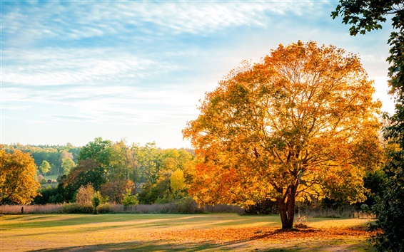 Fond d'écran Paysage, automne de la nature, les arbres, les feuilles jaunes, bleu ciel