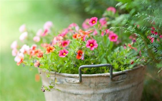 Wallpaper Little flowers in the bucket, green background