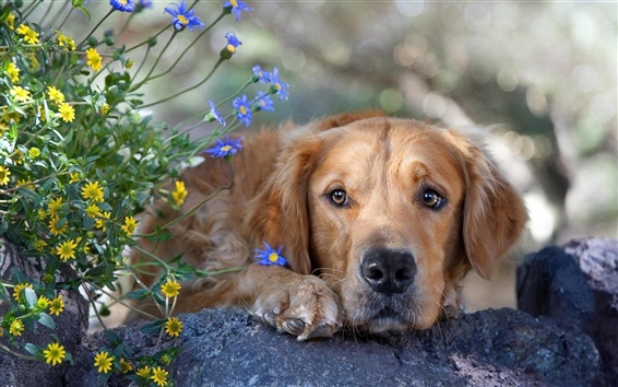 Wallpaper Lonely dog and flowers