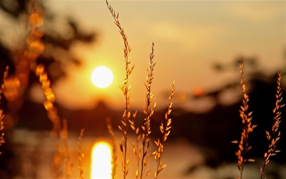 Wallpaper Macro plants, sunset, light, blur background