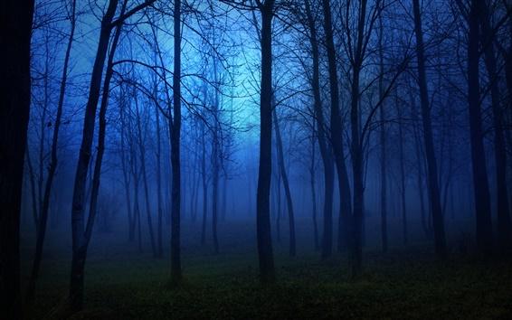 Обои Утренний лес, туман, деревья, синий