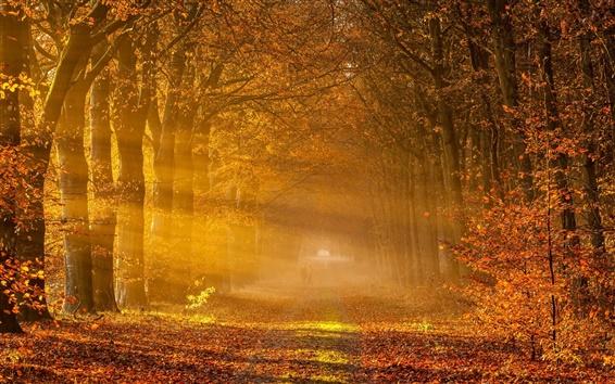 Wallpaper Nature autumn, road, trees, yellow leaves, fog, sunlight