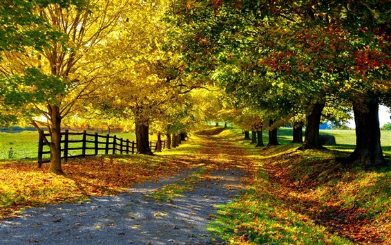 Wallpaper Nature autumn, yellow leaves, trees, road, fence