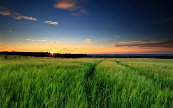 Обои Природа пейзаж, зеленая трава, поля пшеницы, закат, вечер, небо